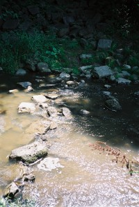 Stepping stones across creek at Camp Bimini in St. Pauls Ontario